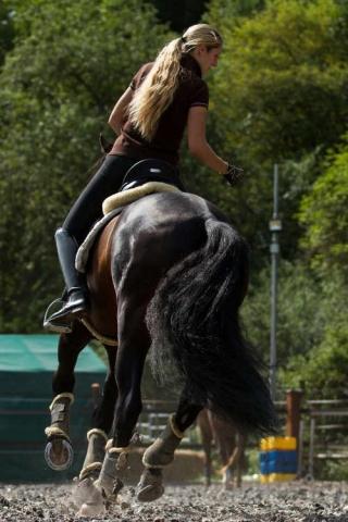 Vivien Linzmeier Working Equitation Kurs